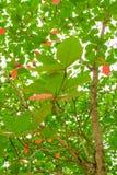 βγάζει φύλλα το δέντρο Στοκ Εικόνες