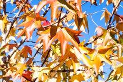 Βγάζει φύλλα το φθινόπωρο με το φωτεινό ουρανό, κινηματογράφηση σε πρώτο πλάνο Στοκ Φωτογραφίες