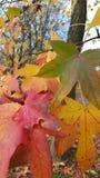 Βγάζει φύλλα το φθινόπωρο Στοκ φωτογραφία με δικαίωμα ελεύθερης χρήσης