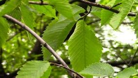 Βγάζει φύλλα το φύσηγμα στον αέρα απόθεμα βίντεο