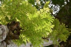 βγάζει φύλλα τροπικό Στοκ φωτογραφία με δικαίωμα ελεύθερης χρήσης