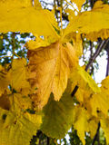 Βγάζει φύλλα (υπόβαθρο) Στοκ φωτογραφία με δικαίωμα ελεύθερης χρήσης