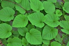 βγάζει φύλλα Στοκ Εικόνα