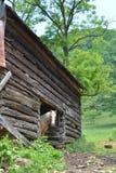 βελγικό άλογο Στοκ φωτογραφία με δικαίωμα ελεύθερης χρήσης