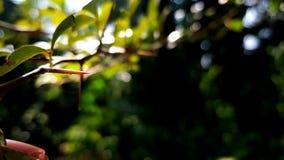 Βελόνα δέντρων ενός κλάδου του δέντρου Στοκ φωτογραφίες με δικαίωμα ελεύθερης χρήσης