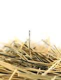 βελόνα θυμωνιών χόρτου Στοκ φωτογραφία με δικαίωμα ελεύθερης χρήσης