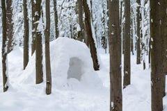 Βελόνα στο χειμώνα πιό forrest Στοκ Εικόνες