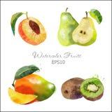 Βερίκοκο, αχλάδι, μάγκο, ακτινίδιο Στοκ Εικόνες