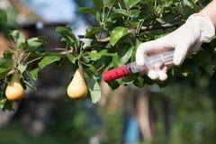 Βελόνα και σύριγγα που εγχέουν αντιπροσωπεύοντας τα γενετικά τροποποιημένα φρούτα Στοκ φωτογραφία με δικαίωμα ελεύθερης χρήσης