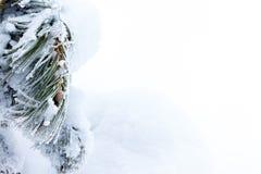 Βελόνες πεύκων που καλύπτονται με το χιόνι και ένα νέο hotshot Στοκ Εικόνες