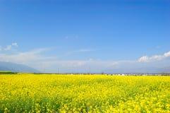βιασμός λουλουδιών Στοκ εικόνες με δικαίωμα ελεύθερης χρήσης