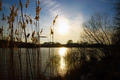 Βιασύνες κοντά στη λίμνη Στοκ εικόνες με δικαίωμα ελεύθερης χρήσης