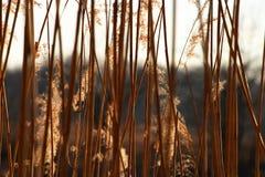 Βιασύνες κοντά στη λίμνη Στοκ φωτογραφίες με δικαίωμα ελεύθερης χρήσης