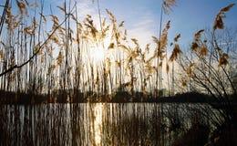 Βιασύνες κοντά στη λίμνη Στοκ Εικόνες