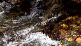 Βιασύνες νερού πέρα από καλυμμένους τους φύλλο βράχους στο μικρό ρεύμα απόθεμα βίντεο