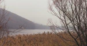 Βιασύνη στην ακτή λιμνών το χειμώνα στοκ εικόνες