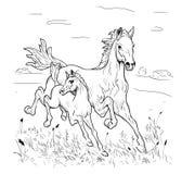 Βιασύνη φοράδων και foal στη στέπα Στοκ φωτογραφία με δικαίωμα ελεύθερης χρήσης