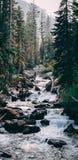Βιασύνη φύσης στοκ εικόνες