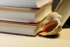 Βιβλία και κοχύλι θάλασσας Στοκ Εικόνα