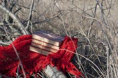 Βιβλία σε ένα κόκκινο σάλι σε ένα πεσμένο δέντρο Στοκ Φωτογραφίες