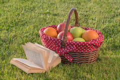 Βιβλίο και καλάθι των ώριμων φρούτων Στοκ εικόνες με δικαίωμα ελεύθερης χρήσης