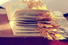 Βιβλίο με τα ξηρά φύλλα φθινοπώρου Στοκ εικόνες με δικαίωμα ελεύθερης χρήσης