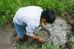 Βιετναμέζικα, ψάρια σύλληψης, λάσπη, Mekong δέλτα Στοκ φωτογραφίες με δικαίωμα ελεύθερης χρήσης