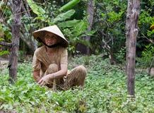 Βιετναμέζικη γυναίκα Στοκ Φωτογραφία