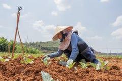 βιετναμέζικη γυναίκα Στοκ Εικόνες