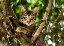 Βιετναμέζικη συνεδρίαση γατακιών σε ένα δέντρο Στοκ φωτογραφία με δικαίωμα ελεύθερης χρήσης