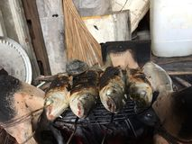 Βιετναμέζικος flathead γκρίζος κέφαλος, Mugil cephalus Στοκ φωτογραφία με δικαίωμα ελεύθερης χρήσης
