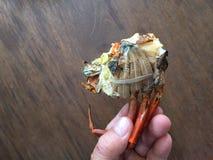 Βιετναμέζικο BBQ serrata Scylla καβουριών λάσπης καβούρι ή ψημένο στη σχάρα καβούρι Στοκ εικόνα με δικαίωμα ελεύθερης χρήσης