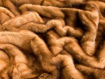 βιζόν γουνών Στοκ Εικόνες