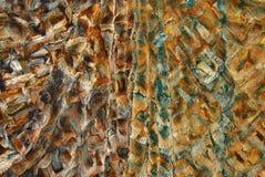 βιζόν γουνών Στοκ φωτογραφία με δικαίωμα ελεύθερης χρήσης