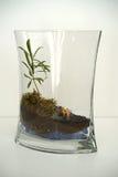 Βικτοριανοί κολυμβητές - λεπτομέρεια terrarium στοκ φωτογραφίες