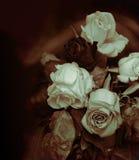 Βικτοριανό θέμα των χαμένων ρωμανικών, εξασθενισμένων τριαντάφυλλων Στοκ εικόνα με δικαίωμα ελεύθερης χρήσης
