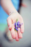 βιολέτα χεριών κοριτσιών &lamb Στοκ Εικόνες