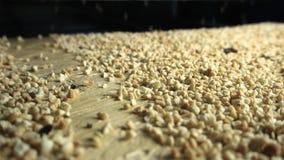 Βιομηχανία διαδικασίας φυστικιών απόθεμα βίντεο