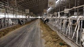 Βιομηχανία μεταποίησης αγροτικών προϊόντων, σταύλος, αγρόκτημα με τις αγελάδες, γεωργία, βόειο κρέας, ζώο, στοκ φωτογραφίες