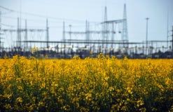 Βιομηχανία πετρελαίου Canola στοκ εικόνες