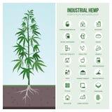 Βιομηχανικές χρήσεις και προϊόντα κάνναβης διανυσματική απεικόνιση
