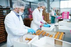 Βιομηχανικοί εργάτες βιομηχανιών ζαχαρωδών προϊόντων που βάζουν τη ζύμη στα κιβώτια Στοκ εικόνα με δικαίωμα ελεύθερης χρήσης