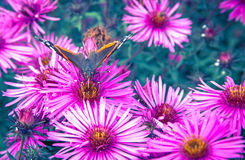βιολέτα λουλουδιών στοιχείων σχεδίου πεταλούδων Στοκ Εικόνες