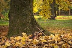 Βιολί κάτω από το δέντρο στοκ εικόνες με δικαίωμα ελεύθερης χρήσης