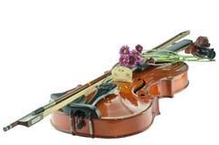 Βιολί και πορφυρή μαργαρίτα στο άσπρο υπόβαθρο στοκ φωτογραφία με δικαίωμα ελεύθερης χρήσης
