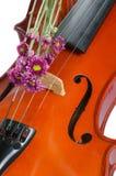 Βιολί και πορφυρή μαργαρίτα στοκ φωτογραφία με δικαίωμα ελεύθερης χρήσης