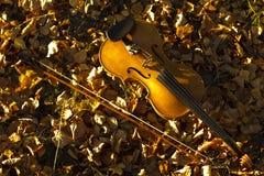 Βιολί που βρίσκεται στα πεσμένα φύλλα Στοκ Φωτογραφία