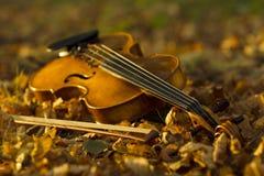 Βιολί που βρίσκεται στα πεσμένα φύλλα Στοκ εικόνες με δικαίωμα ελεύθερης χρήσης