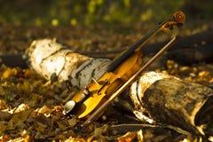 Βιολί στο δάσος φθινοπώρου Στοκ φωτογραφία με δικαίωμα ελεύθερης χρήσης