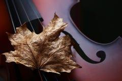 Βιολί φθινοπώρου Στοκ εικόνες με δικαίωμα ελεύθερης χρήσης